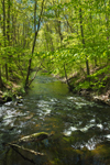 Stony Brook in Spring, Montville, CT
