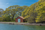Old Boathouse and Oak Trees in Spring on Uncatena Island at Hadley Harbor, Elizabeth Islands, Town of Gosnold, MA