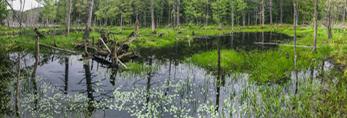 Beaver Pond on Gulf Brook, Athol, MA