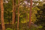 Woodlands along Millers River after Thunderstorm, Bearsden Conservation Area, Athol, MA