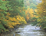Cold River after Heavy Rains and Fall Foliage along the Mohawk Trail