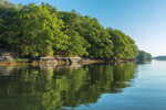 Oak Trees on Georgetown Island Reflecting in Robinhood Cove in Early Morning Light, off Sasanoa River, Georgetown, ME