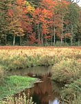 Lawrence Brook and Surrounding Marsh with Fall Foliage