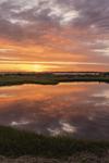 Salt Marsh and Tidal Pools at Potter Cove at Sunrise, Narragansett Bay National Estuarine Research Reserve, Prudence Island, Portsmouth, RI