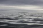 Gray Seascape on Cape Cod Bay, South Shore off Marshfield, MA