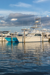 Sport Fishing Boats at Dock in Montauk Harbor at Montauk Yacht Club, Star Island, Long Island, Village of Montauk, East Hampton, NY