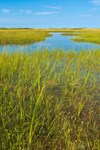 Salt Marsh off Great Salt Pond, Block Island National Wildlife Refuge, Block Island, RI