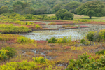 Colorful Wetlands at Peckham Pond, Block Island, RI