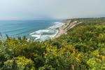 Goldenrods on Mohegan Bluffs with Patchy Fog on Atlantic Ocean, Block Island, RI