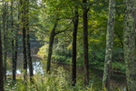 Forest along Millers River in Bearsden Conservation Area, Athol, MA