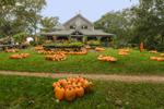 Pumpkin Stand at Morning Glory Farm, Martha's Vineyard, Edgartown, MA