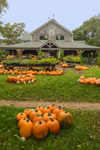 Pumpkin Stand at Morning Glory Farm, Martha's Vineyard, Edgartown, MA