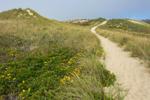Trail Through Sand Dunes at Philbin Beach, Martha's Vineyard, Aquinnah, MA