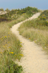 Trail Through Sand Dunes at Philbin Beach, Martha's Vineyard, Aquinnah, MA