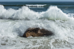 High Surf Crashing against Boulder on Squibnocket Beach, Martha's Vineyard, Chilmark, MA