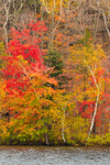 Fall Foliage along Shoreline of Wononpakook Lake, Salisbury, CT