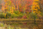 Wetlands and Colorful Foliage in Fall, Sharon, CT