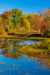 Wetlands in Fall near Shepaug River and Mine HIll Preserve, Roxbury, CT