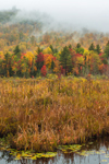 Marsh at Moxham Pond with Low Clouds over Moxham Mountain in Early Autumn, Adirondack Park, Minerva, NY