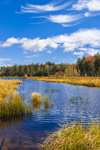 Tamarack (Larch) Trees and Marshes at Inlet to Mason Lake in Autumn, Adirodack Park, Lake Pleasant, NY