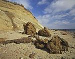 Clay Head Cliffs