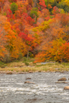 Fall Foliage along West Branch Ausable River, Olympic Scenic Byway, Adirondack Park, near Wilmington, NY