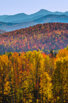 Adirondack Mountains in Fall, Adirondack Park, Harrietstown, NY