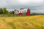 Big Red Barn with Golden Grasses in Field, Finger Lakes Region, Lansing, NY