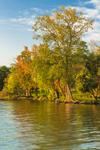 Early Morning Light Shines on Trees along Shoreline of Cayuga Lake, Cayuga Lake State Park, Finger Lakes Region, Seneca Falls, NY