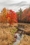 Brilliant Fall Foliage and Golden Grasses along Prince Brook, Barre, MA