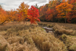 Brilliant Fall Foliage and Golden Grasses along Prince Brook, Barre, MA