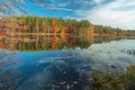 Fall Foliage along Scotts Pond Shoreline, Fitzwilliam, NH