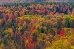 Fall Foliage in Green Mountain National Forest, View from Hogback Mountain, Marlboro, VT