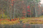 Woodlands and Marsh in Fall at Harvard Forest, Petersham, MA