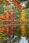 Fall Foliage along Connor's Pond, Petersham, MA