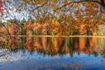 Fall Foliage along Shoreline of Gaston Pond, Barre, MA