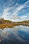 Cloud Reflections in Wetlands near Lovewell Pond in Fall, Hubbardston, MA