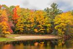 Damon Pond in Willard Brook State Forest, Ashby, MA