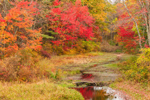 Beaver Dam and Foliage on Tributary of Squannacook River in Fall, Townsend, MA
