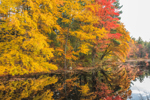 Colorful Fall Foliage along Shoreline of Pierce Pond, Brookline, NH