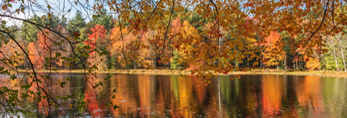 Fall Foliage along Shoreline of Gaston Pond, Barre, MA
