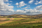 Corn Fields, Tree Farm and Rolling Hills on Rural Farmland in Fall, Lycoming County, Moreland, PA