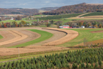 Corn Fields and Tree Farm on Rural Farmland in Fall, Lycoming County, Moreland, PA