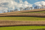 Pattern of Corn Fields on Hillside in Fall, Lycoming County, Franklin, PA