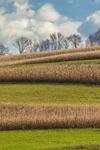 Pattern of Corn Fields on Hillside in Fall, Lycoming County, Franklin, PA