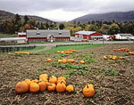 Green River Farms with Pumpkin Field in Fall, Berkshire Mountains
