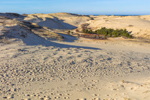 Dunes in Provincelands at Cape Cod National Seashore, Cape Cod, Provincetown, MA