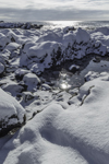 Snow-covered Rocks along Shoreline at Oaks Neck, Atlantic Ocean, Kennebunk, ME