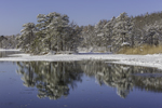 Coastal Forest in Winter Reflecting in Calm Water off Kennebunk River, Kennebunk, ME