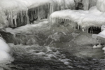 Close Up of Icy Cascade at Jackson Falls on Wildcat Brook in Winter, White Mountains Region, Jackson, NY